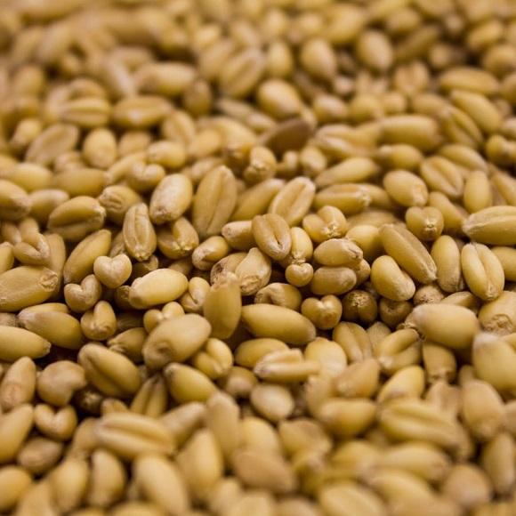 Rahr: Unmalted Wheat
