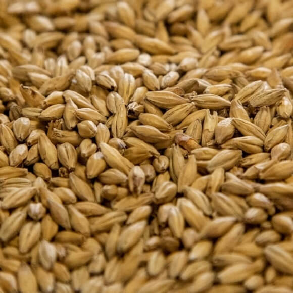 Dingemans: Pale Malt
